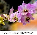 purple orchids  violet orchids. ...   Shutterstock . vector #507239866