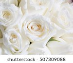 Stock photo the group of white roses soft style high key 507309088