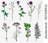 herbs and wild flowers. hand... | Shutterstock .eps vector #507358912