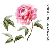 Pink Peony With Leaves. Hand...