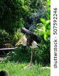 Small photo of Lesser adjutant stork in its habitat, zoo Thailand