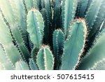 Blurred Green Cactus Closeup....