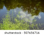 Small photo of Close-up view on flowering alisma cluster on calm water surface background