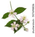 Blossom Blackberry Fruit Bunch...