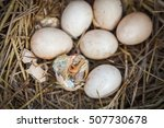little baby chick hatching out... | Shutterstock . vector #507730678