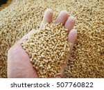 animal feed review  | Shutterstock . vector #507760822
