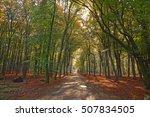 sunrays of light in autumn...   Shutterstock . vector #507834505