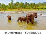 funny elephants in river. take... | Shutterstock . vector #507880786