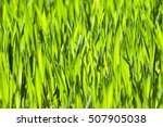 photographed close up green... | Shutterstock . vector #507905038