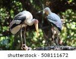 elegant long legged bird heron  ... | Shutterstock . vector #508111672