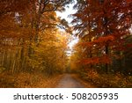 autumn foggy forest | Shutterstock . vector #508205935