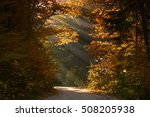 autumn foggy forest | Shutterstock . vector #508205938
