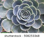 close up of a succulent plant | Shutterstock . vector #508253368