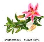 spring flower isolated on white ... | Shutterstock . vector #508254898
