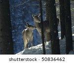 red deer doe with cub   Shutterstock . vector #50836462