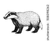 Hand Drawn Badger. Retro Sketch ...