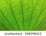 Under Lotus Leaf
