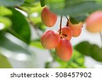 fruit thailand rare and useful. | Shutterstock . vector #508457902