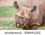 Rhinoceros Enjoying On Green...