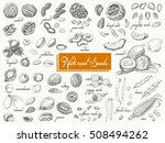 big collection of isolated nuts ... | Shutterstock .eps vector #508494262