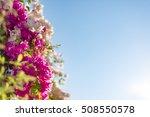 flower frame  pink and white... | Shutterstock . vector #508550578