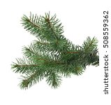 branch of fir tree is isolated... | Shutterstock . vector #508559362