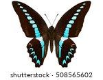 Milon Swallowtail Butterfly ...