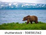 Brown Bear at Kurilskoye Lake