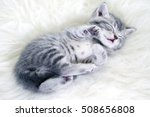 Stock photo kitten sleeps 508656808