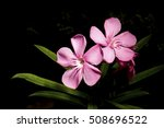 beautiful pink flower on a... | Shutterstock . vector #508696522