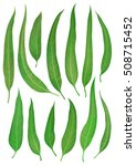vector leaf isolated and green. ... | Shutterstock .eps vector #508715452