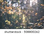 autumn colored forest leaves... | Shutterstock . vector #508800262