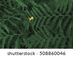 dark fern leaves background... | Shutterstock . vector #508860046