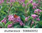 european peacock butterfly... | Shutterstock . vector #508860052