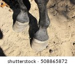 Horse Hooves In The Dirt With...