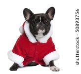 French Bulldog In Santa Coat  ...