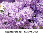 background of purple blossom flowers - stock photo