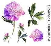 handwork set of watercolor pink ... | Shutterstock . vector #509059348