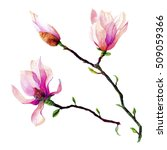 watercolor branches of pink... | Shutterstock . vector #509059366