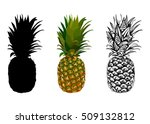 vector illustration of... | Shutterstock .eps vector #509132812