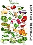raw vegetables. carrot  tomato  ... | Shutterstock .eps vector #509153005