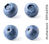 blueberry. bilberry. berries... | Shutterstock . vector #509163556