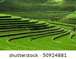 Terrace Rice Fields  Bali ...