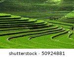 Terrace Rice Fields  Bali ...