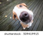 Stock photo funny extreme close up small puppy 509419915