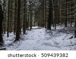 Path In Dark Winter Forest