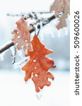Nature Encased In Ice After A...