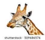 Cute Giraffe Isolated On White...