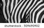 Blur In South Africa   Kruger ...
