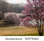 Colorful Magnolia Tree In The...